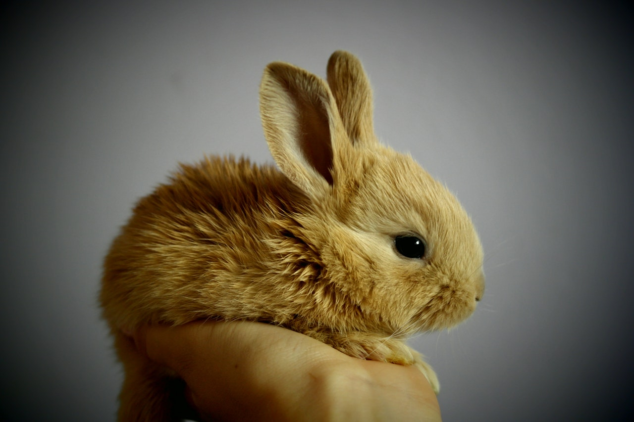 rabbit-palm-hand-snatch-53966